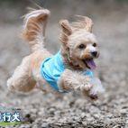 4thアニバーサリー/飛行犬撮影会