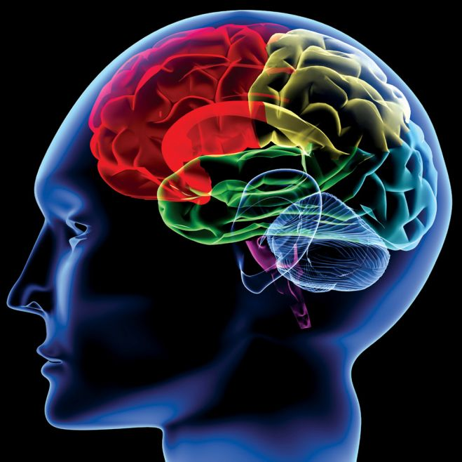 スポーツ脳科学が明かす「ゾーン」 に必要な集中力とは 編 2018年10月8 ...