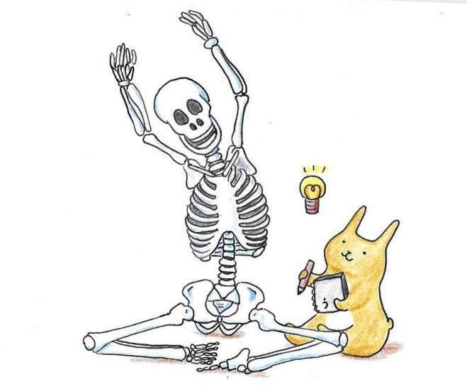 からだの学校~解剖学① 2017年4月16日【日曜クラス@スタジオエール】(札幌)