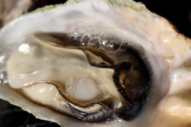 祭り 2020 牡蠣 【中止】「第17回 ひなせかき祭